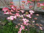 IMG_0381花ミヅキ.JPG